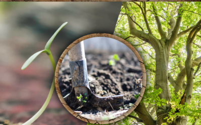 Tips for Planting Happy, Healthy Trees