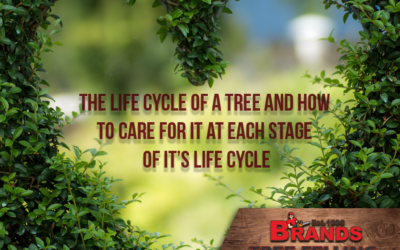 (Part 2) The Life Cycle of Trees and How to Care for them at Each Phase