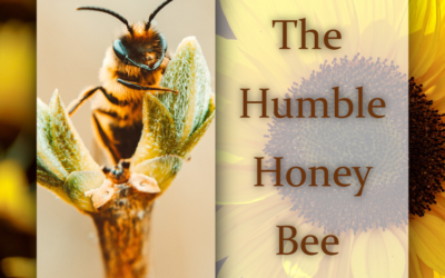 The Humble Honey Bee – What will happen if they disappear?
