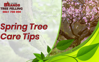 Spring Tree Care Tips