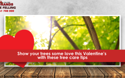 SHOW YOUR TREES SOME LOVE THIS VALENTINE'S WITH THESE TIPS FOR CARING FOR YOUR TREES IN THE LATE SUMMER.