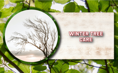 WINTER TREE CARE TIPS