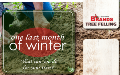 TREE CARE TIPS FOR AUGUST
